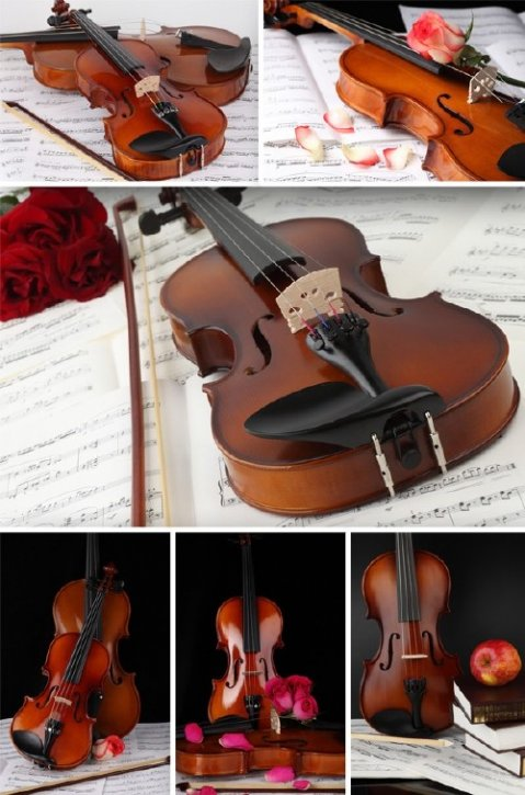 Violin (musical instrument) the images
